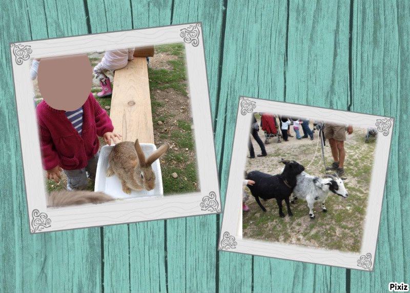 pixiz_508798dad18c6 animaux dans LES SORTIES
